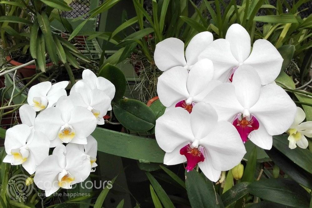 Royal Botanical Garden, Peradeniya, Sri Lanka