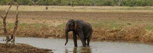 Удавалаве, Шри Ланка