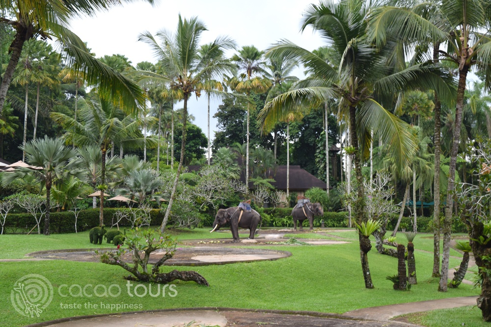 сафари със слонове, Убуд, Бали, Индонезия