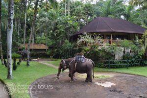 сафари със слонове, Убуд, о-в Бали, Индонезия