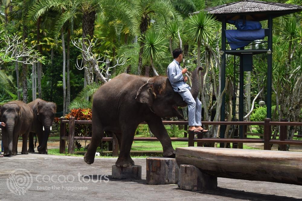 сафари със слонове, Убуд, остров Бали, Индонезия