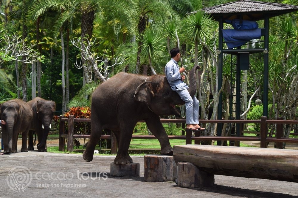 Elephant Safari, Ubud, Bali, Indonesia