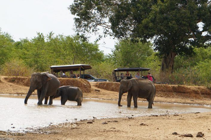 Jeep Safari, Sri Lanka
