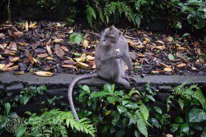 гората на маймуните, Убуд, Бали, Индонезия