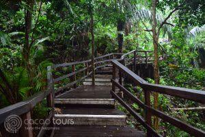 гората на маймуните, Убуд, Индонезия