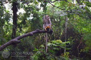 гората на маймуните, Убуд, остров Бали, Индонезия
