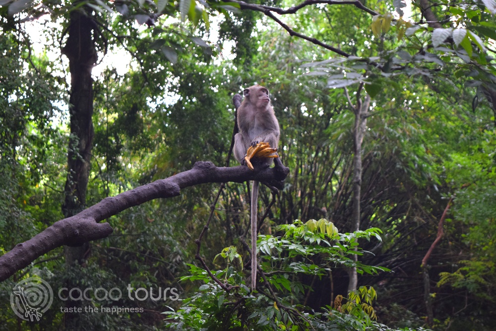 Monkey Forest, Bali, Indonesia