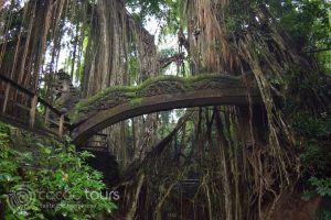 гората на маймуните, Бали, Индонезия