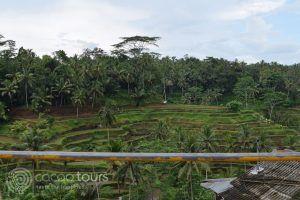оризовите полета Тегалаланг, Бали, Индонезия