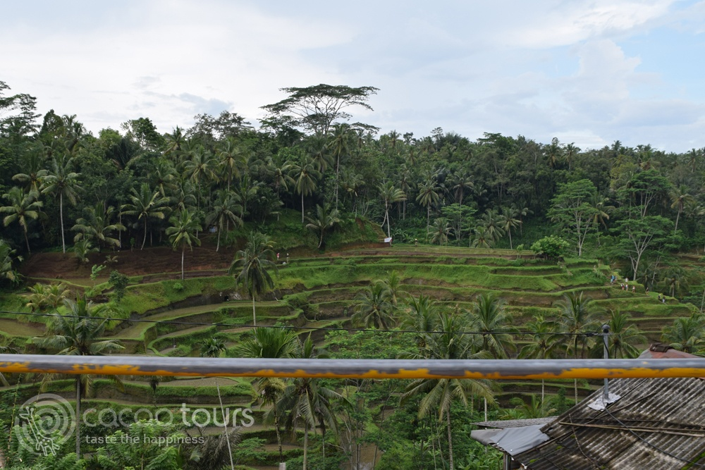 Оризовите полета Тегалаланг (Tegalalang) на остров Бали, Индонезия (Bali, Indonesia)