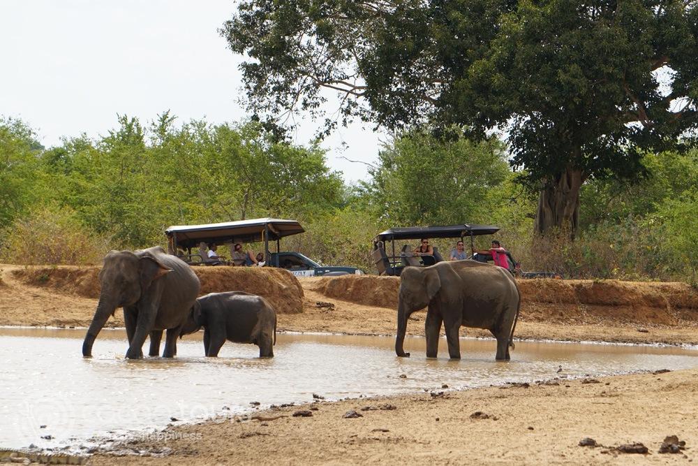 Джип сафари в Шри Ланка (jeep safari Udawalawe National Park, Sri Lanka)