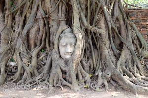 Ват Махатат, Аютая, Тайланд