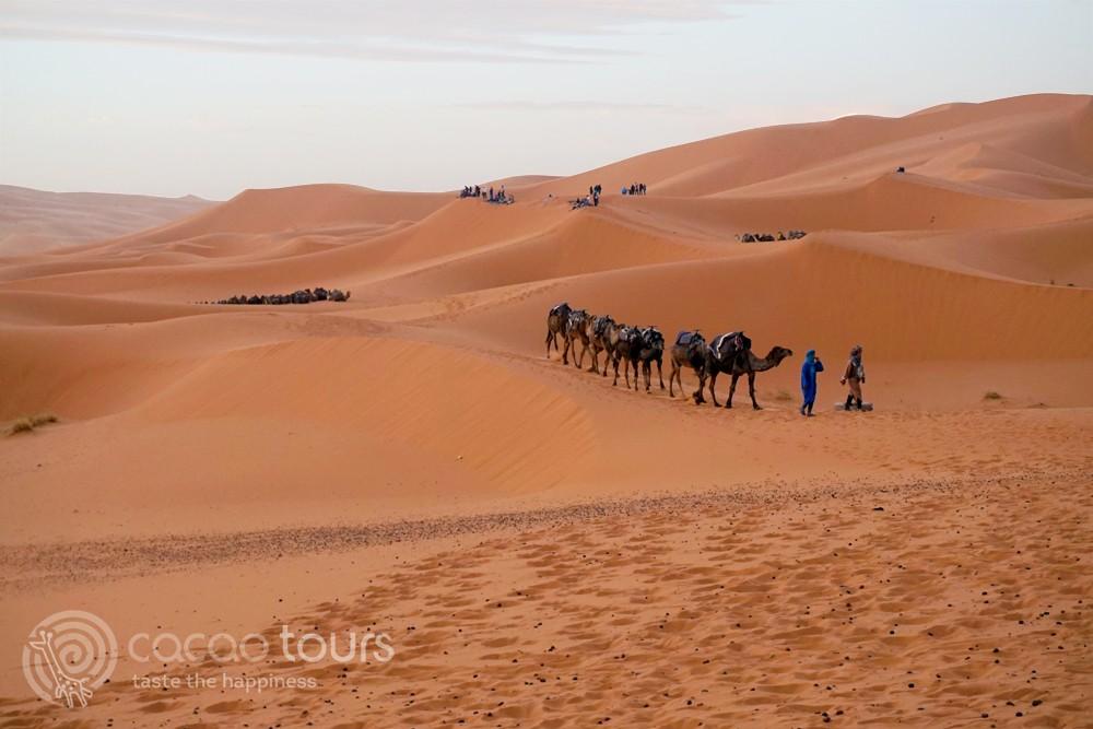 яздене с камили в пустинята Сахара (Sahara), Ерг Чеби (Erg Chebbi), Мароко (Morocco)