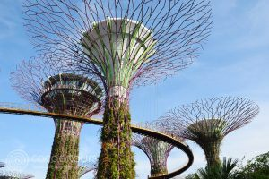 Gardens by the Bay, SuperTree Grove, Singapore, Singapore