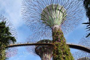 Gardens by the Bay, SuperTree Grove, Singapore, Singapore