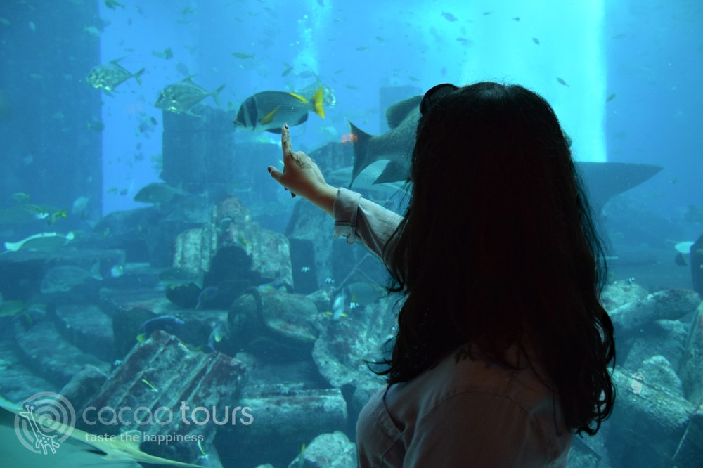 Atlantis the Palm, Auqarium Lost Chambers, Dubai, UAE