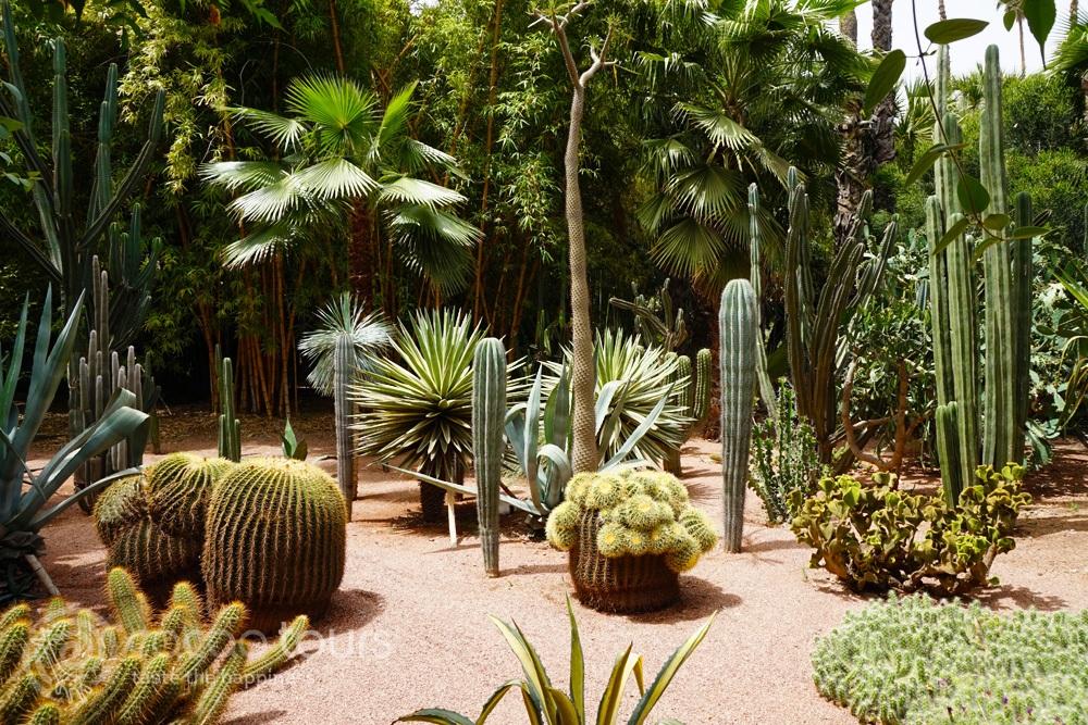 кактуси в градините Мажорел в Маракеш (Majorelle Garden, Marrakech, Morocco)