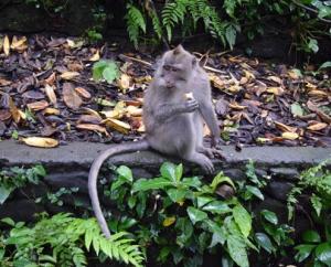 С деца в Бали, Monkey Forest, Ubud, Bali, Indonesia