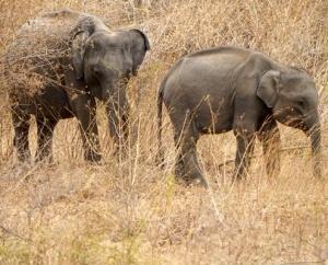 джип сафари в Шри Ланка, национален парк Удавалаве