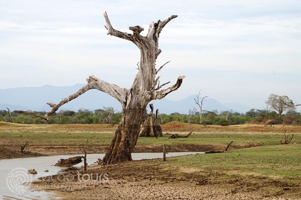 пейзаж от национален парк Удавалаве (Udawalawe National Park, Sri Lanka)