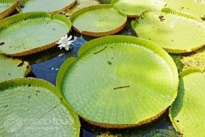 Mauritius National Botanical Garden Pamplemousse