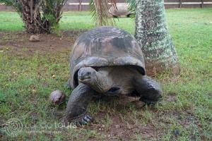 La Vanille Nature Park, Mauritius