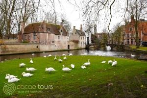 Лебеди в Брюж, Белгия