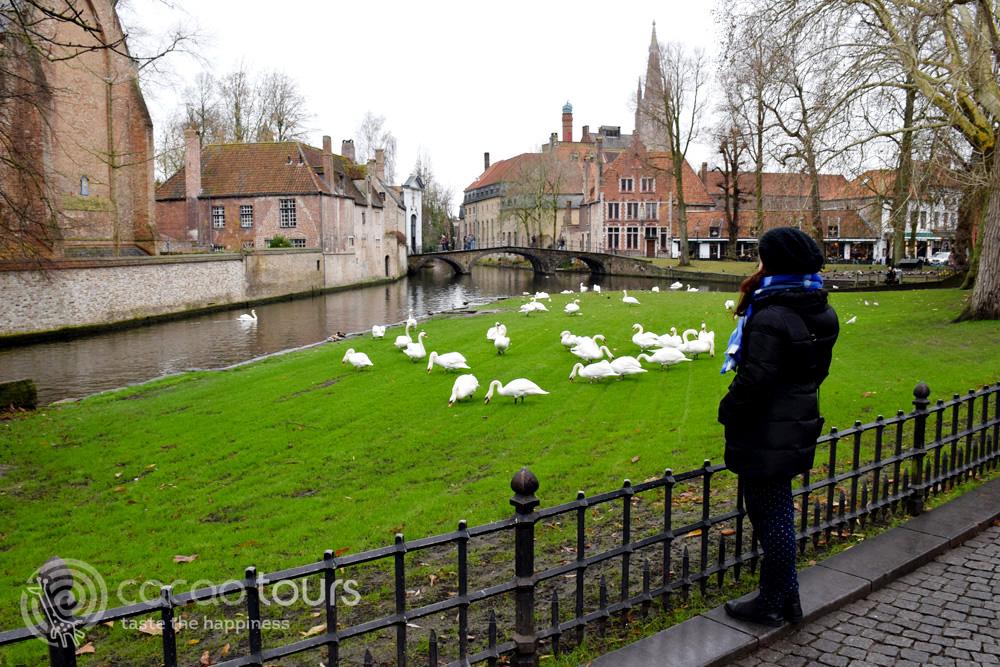 Лебеди до езерото на любовта в Брюж