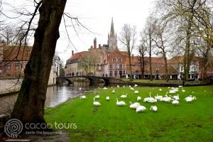 Лебеди до езерото на любовта в Брюж, Белгия