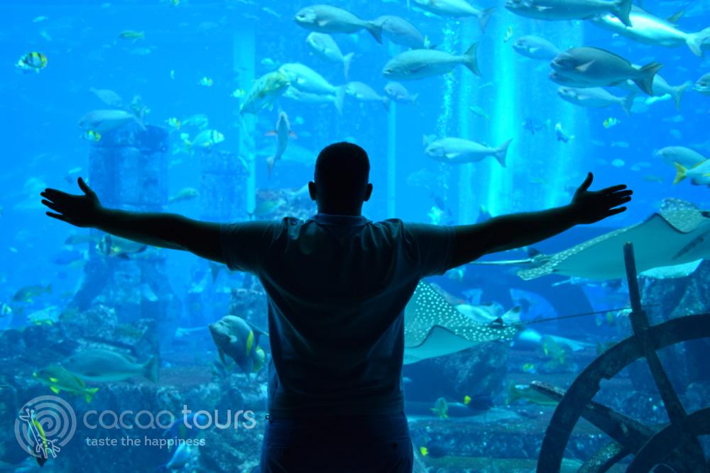 Аквариумът в Atlantis the Palm - Auqarium Lost Chambers, Dubai, UAE