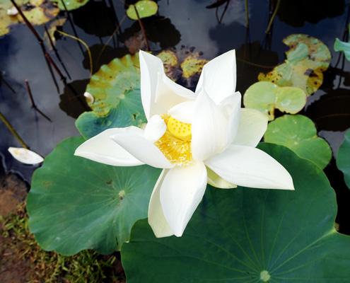 екзотично цвете от Малдиви - топ хотели за меден месец на Малдивите